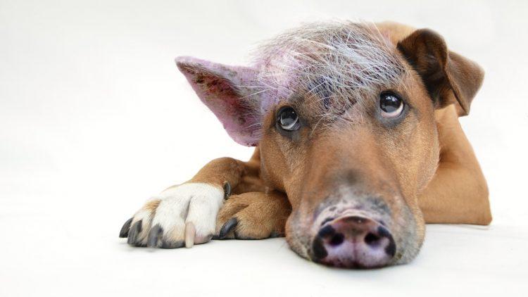 Raus aus der Selbstsabotage- So unterscheidest du zwischen Saboteur und Schweinehund